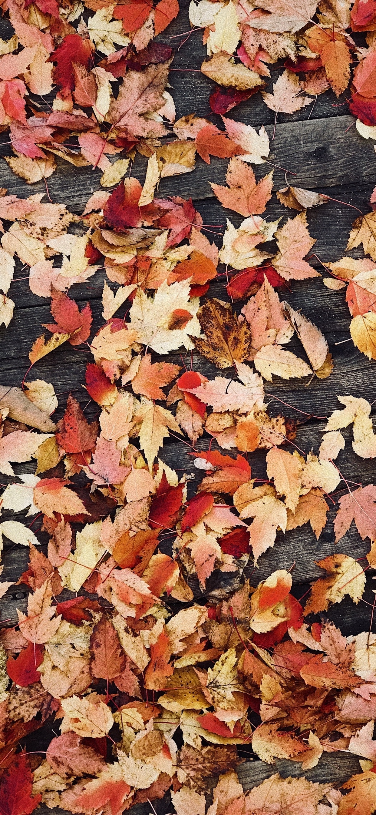 Wallpaper Weekends: Autumn iPhone XS Max Wallpapers