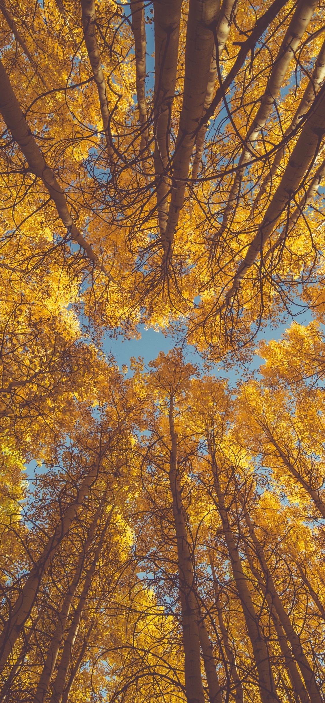Wallpaper Weekends Autumn Foliage Iphone Wallpapers