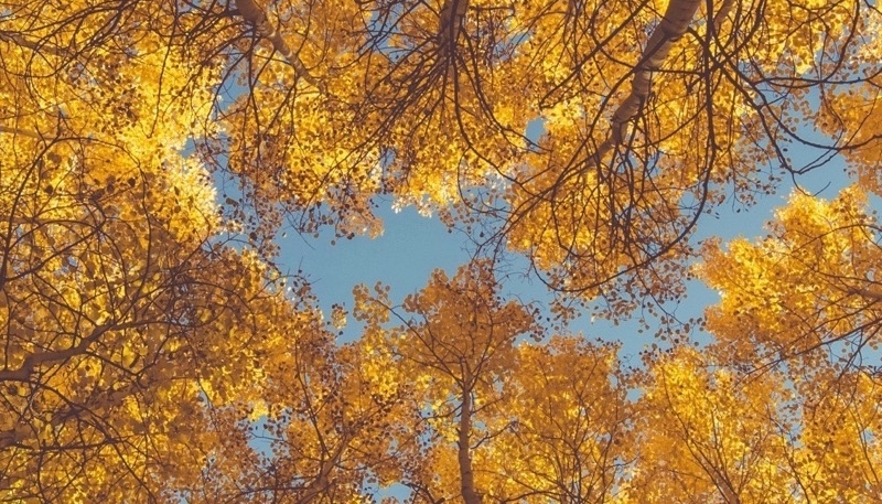 Wallpaper Weekends: Autumn Foliage iPhone Wallpapers